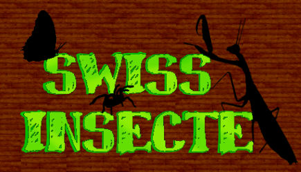 Swiss-insecte Index du Forum