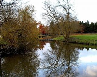 AAPPMA du Loiret (45)  :L e Cosson Le-cosson2-8cbce6