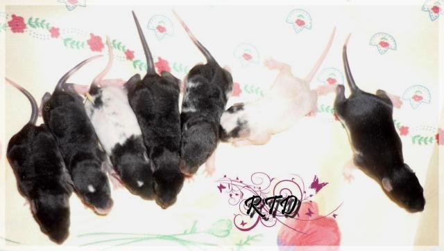 Zig-zag x RTR Panda, de jolies crevettes P1020463-a7db7c