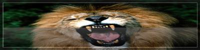 http://img41.xooimage.com/files/5/4/9/firma-leon-3-18f8ea4.jpg