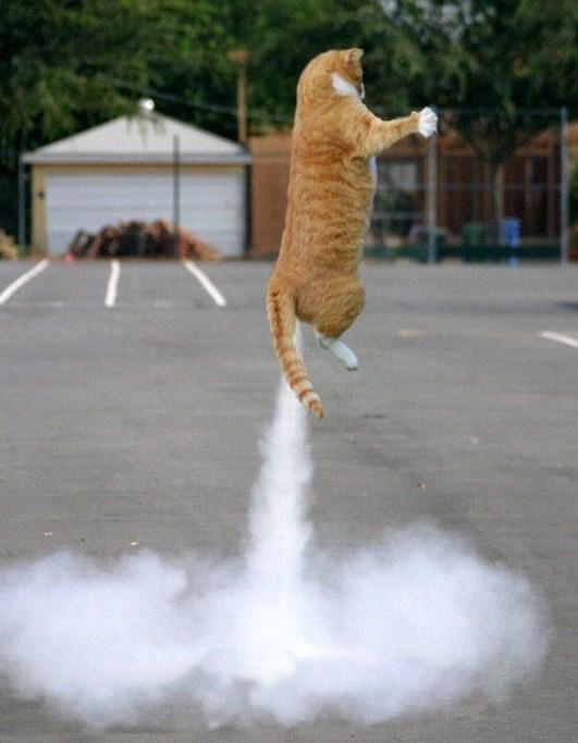 Exposition de minoux meow meow 5574rs0433-2076233