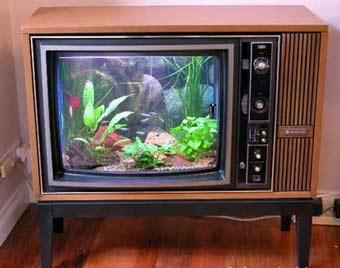 bac de trés mauvais gout  Aquarium-tv-17c151d