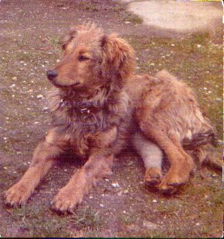 Mon chien Voyou, mes bébés à plumes et compagnie E-et-cie-voyou1-28a4978