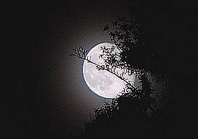 Crepuscule  Moon-1ea001f